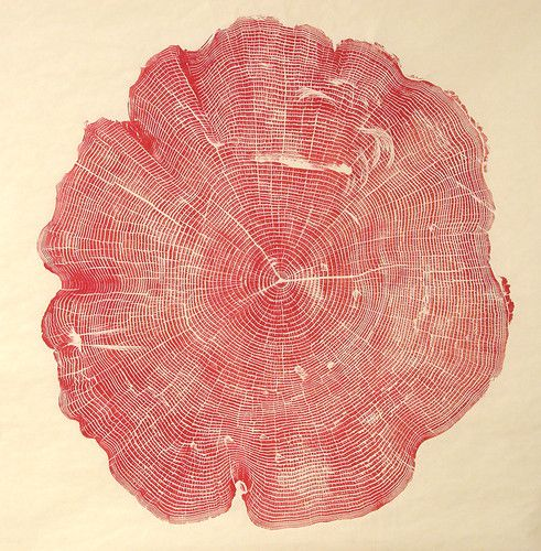 1 | Beautiful Photos Of Tree Rings Remind Us To Slow Down A Little | Co.Exist: World changing ideas and innovationTrees Rings, Wood Block, Trees Trunks, Red, Inspiration, Bryans Nash, Art, Prints, Nash Gill