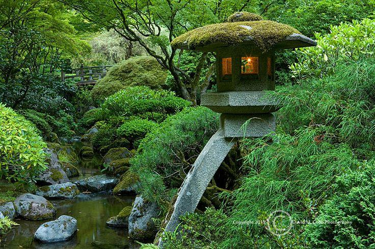 17 best images about summer in the garden on pinterest for Japanese garden koi