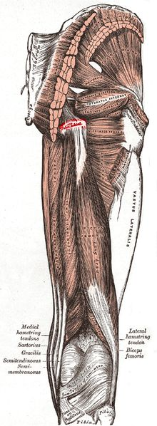 17 Best Images About Pain In The Butt Ischial Bursitis