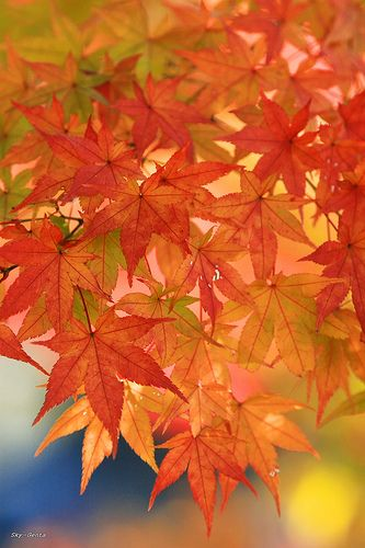 growing of autumn