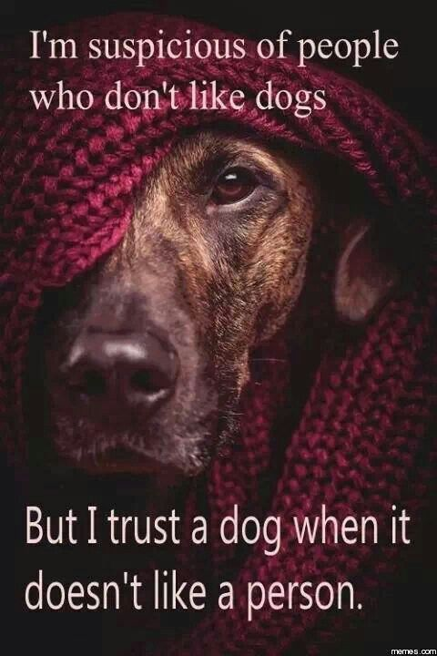 I don't trust people who don't like dogs.