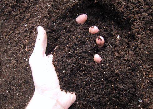Learn how to build healthy soil to nourish your farm garden.