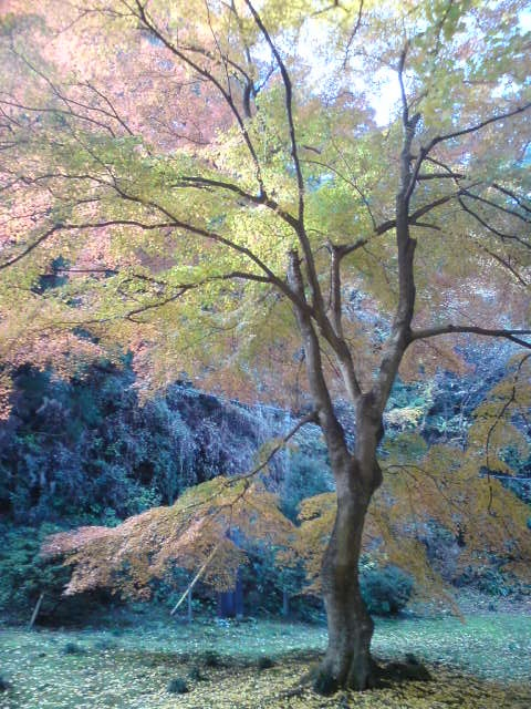 Autumn, Bandou hudasyo Shoubou-ji temple (10/33) - 坂東33札所 10番 正法寺の紅葉