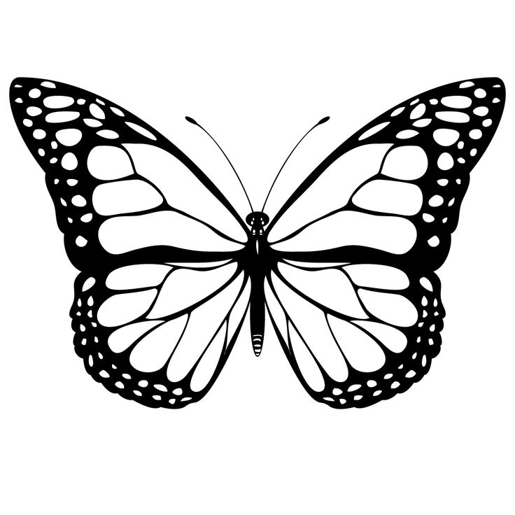 A printable pattern for my Butterfly. Large hand drawn Butterfly  | Drawn Butterfly Pictures