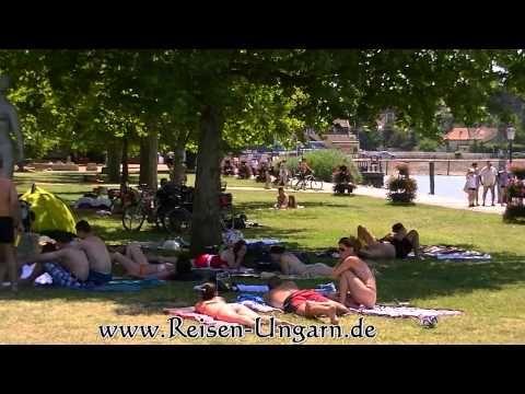 Velvet - Balaton - Mégis vannak szuper kutyabarát nyaralóhelyek a Balatonon