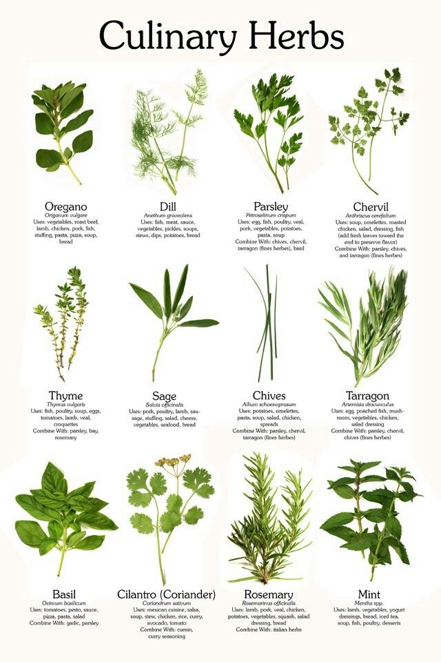 Culinary Herbs and their uses