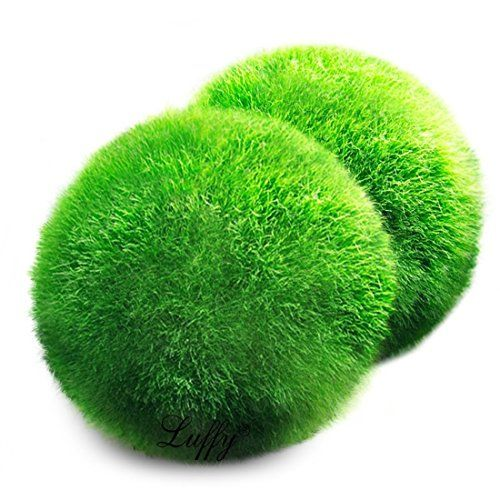 2 Luffy Giant Marimo Moss Ball Luffy
