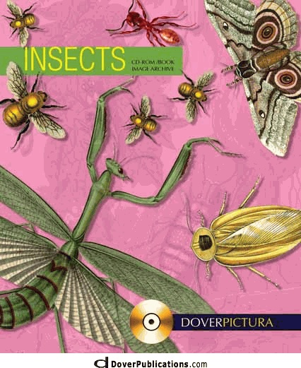 Insects for decoupage