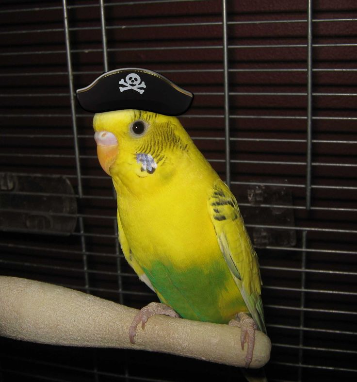 how to make costumes for pet birds