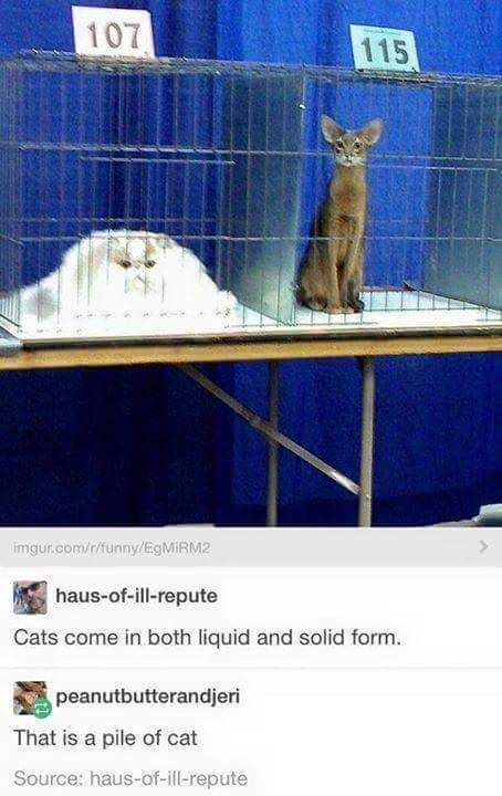 The states of cats: Cats come in both liquid and solid form | 27 Cat Pictures That Are Never Not Funny