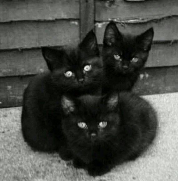 """* * KITTEN IN BACK: """" Weez been hunkerin' heres fer 3 days. Dat shoulds be de lucky number. A trio dat needs a home. Wills yoo take us ? """""""