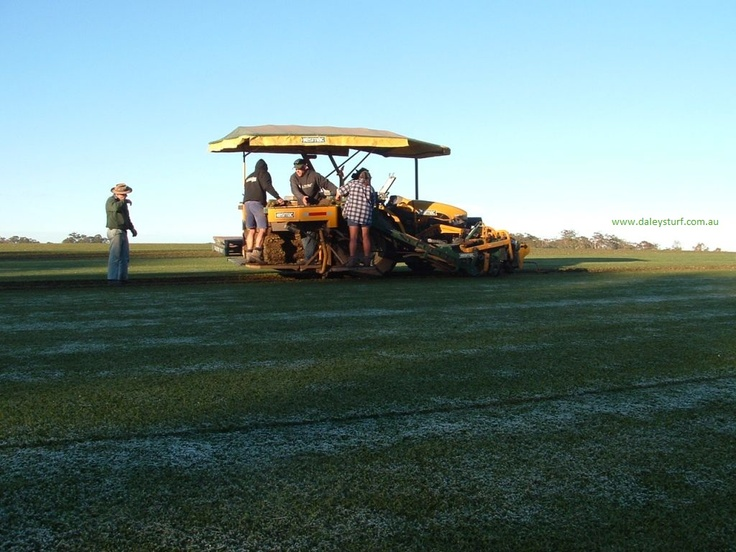 Harvesting lawn turf at Daleys Turf on a frosty morning at Beerwah, Sunshine Coast, Qld, Australia