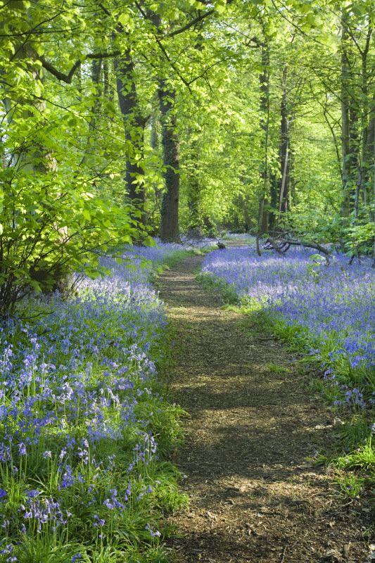 Stocktons Wood, Speke Hall, Merseyside. Near Liverpool, England.