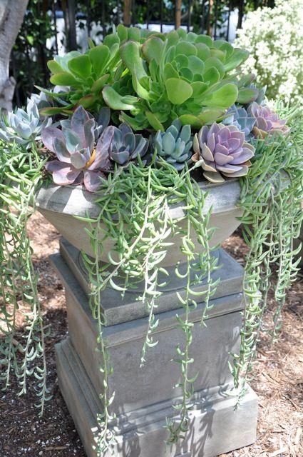 Various succulents in a pedestal planter. I love succulents.
