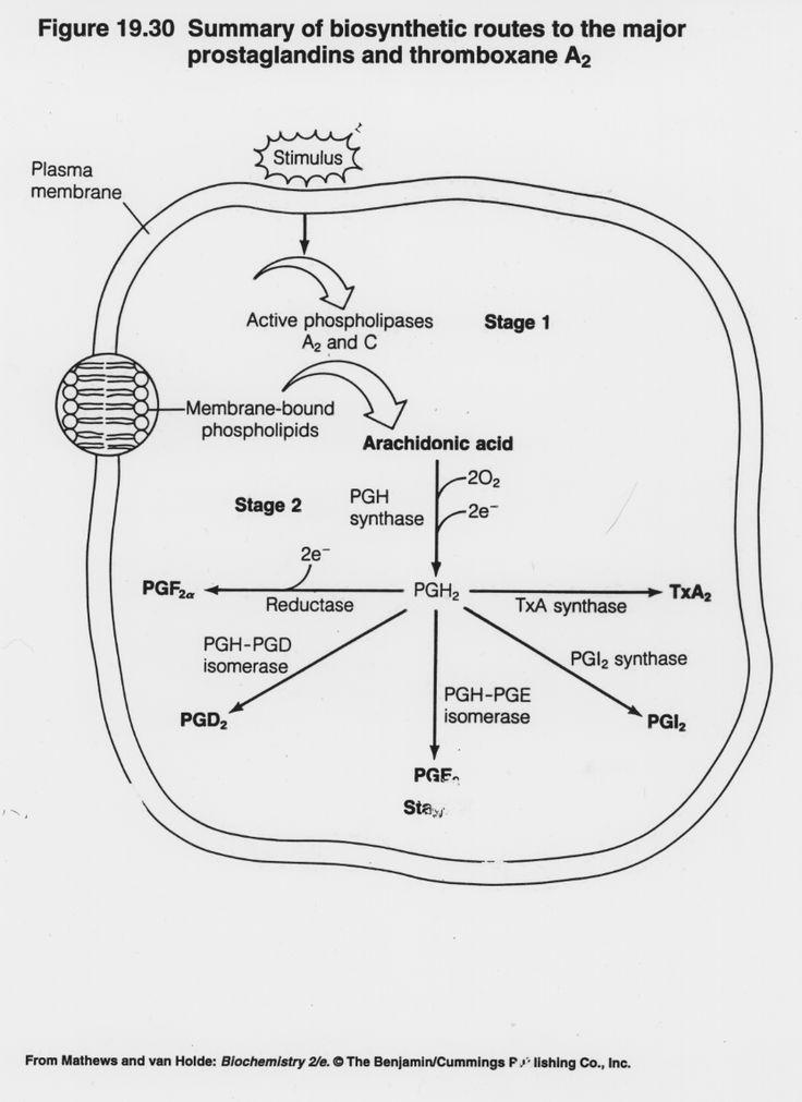 Prostagladines
