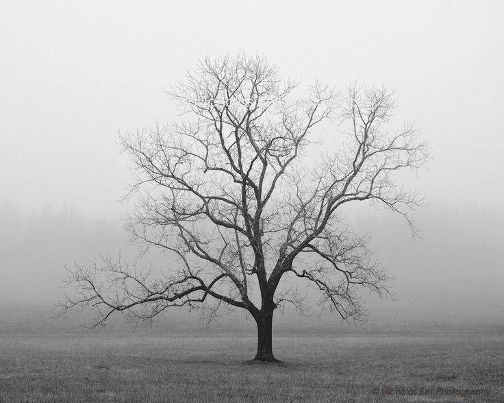 black and white photography, trees, tree, tree photography, lone tree, fog, foggy, Velvet Sunrise by NicholasBellPhoto on Etsy https://www.etsy.com/listing/62908513/black-and-white-photography-trees-tree