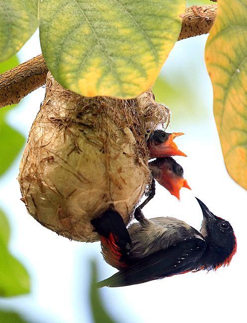 http://www.nature-pictures.org/foto_DO_prezentacji/4318_e3f6410e2aa5d3262b2386759ddcd7dc_2.jpg