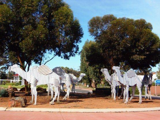 Norseman Camels sculpture Western Australia • big things Australia tour