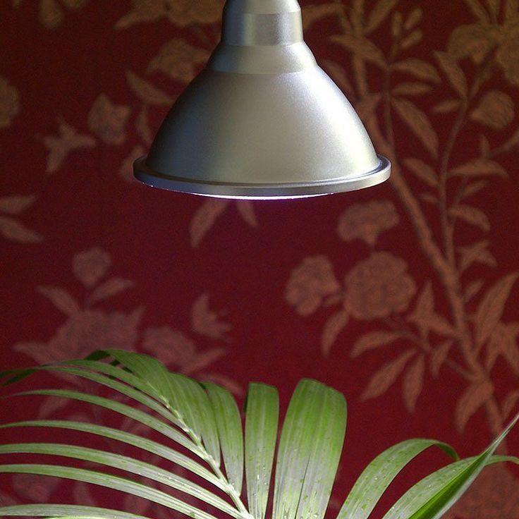 Vår egen växtlampa - Primula Indoor har ett ljus som är idealiskt för belysning av växter som står mörkt inomhus.  #Trädgård #Garden #Blommor #Flowers #Frö #Frukt #Odling #Lantliv #Minträdgård #Mygarden #Hemodlat #Wexthuset