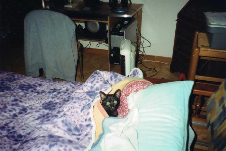 La mia terza gatta Principessa mia la dea egizia.