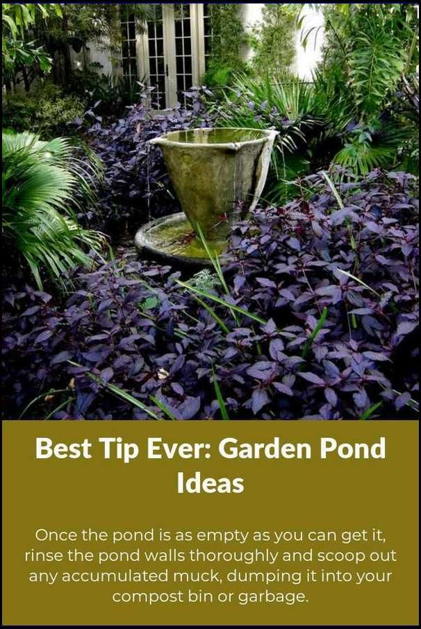 Want To Become A Great Pond Gardener? Read These Pointers