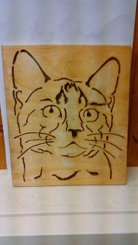 katt /cat