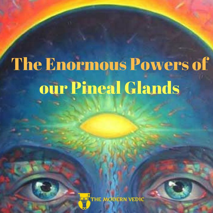 Experts of neurochemistry consider the pineal and the pituitary glands to be the most important glands in the endocrine system. The hormones like androgen secreted by the pituitary gland are found to control not only the sex related activities but also the decision making capabilities of a person, soundness of thinking and space-time based perceptions of an individual.  #themodernvedic #mind #glands #endocrine_system #body #heriditary #genetic #embryo #elucidation #hormones #androgen