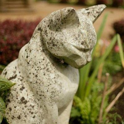 Los gatos blancos del Castillo de Belfast