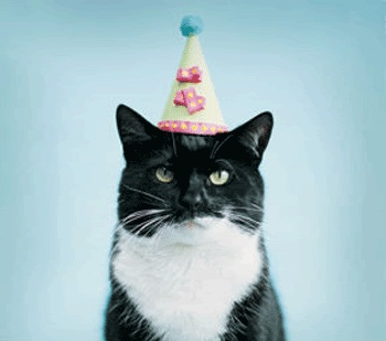 Here's a very excited birthday cat for you!