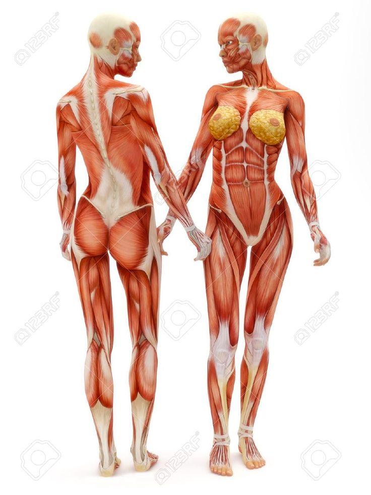 Mejores 38 imágenes de Anatomía | Musculos en Pinterest | Anatomía ...