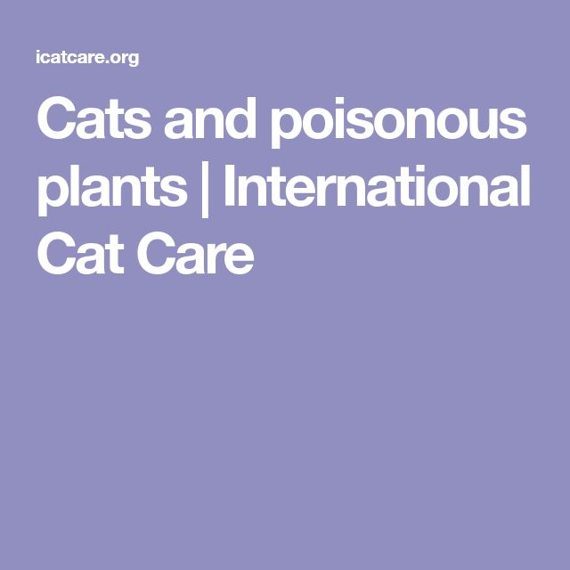 Cats and poisonous plants | International Cat Care