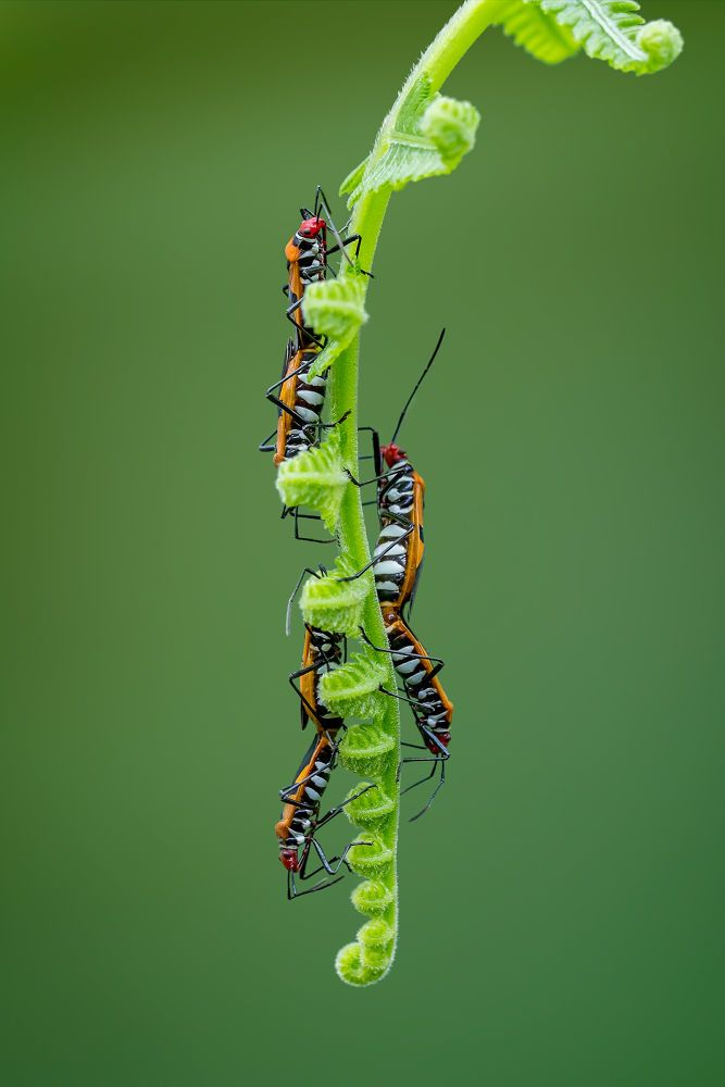 Triple Mating by iyokcoda