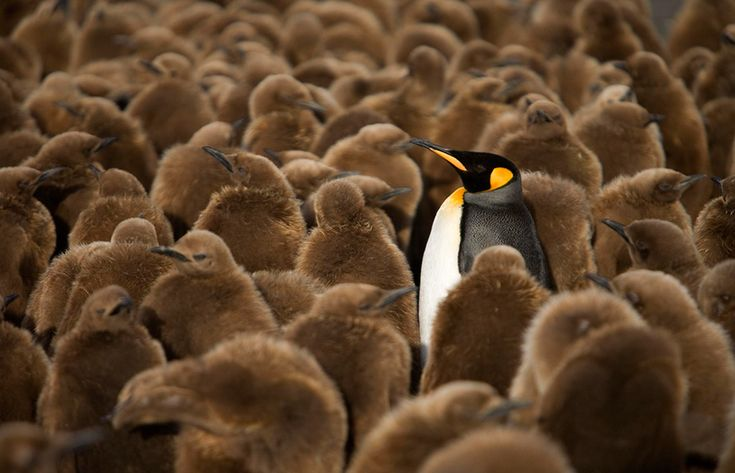 Standing out in the crowd  20 Beautiful Pics To Celebrate Penguin Awareness Day | Bored Panda