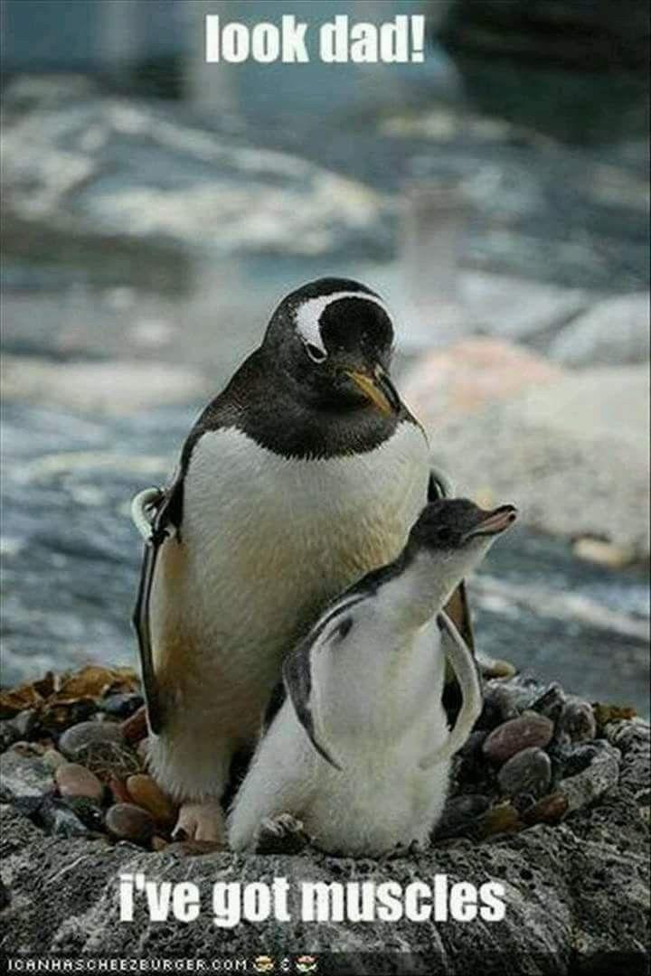 Penguins Gone Rogue