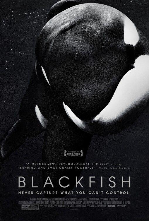 ¤ Blackfish - Tilikum est un orque agressif. En captivité dans un parc aquatique, il a tué trois personnes. Avec l'appuie d'images choquantes, Blackfish fait intervenir des spécialistes qui luttent pour le maintien de ces animaux à l'état sauvage.