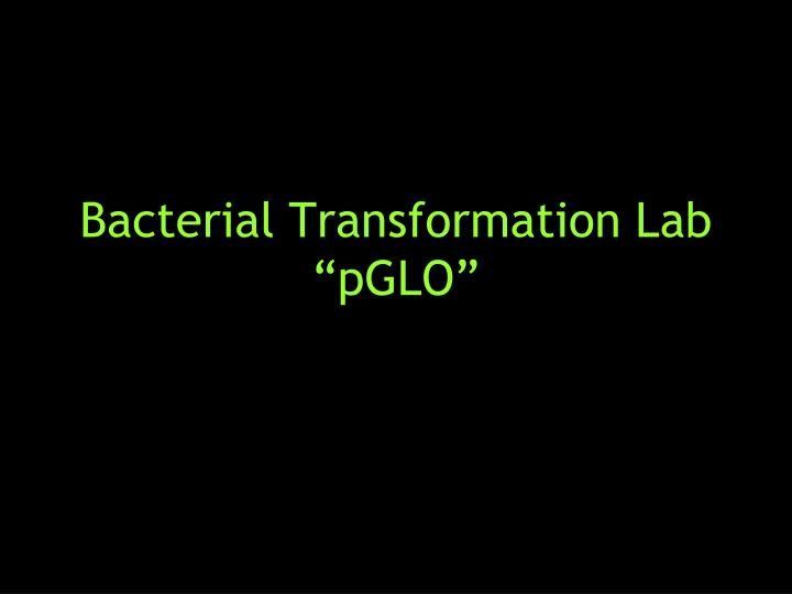 "Bacterial Transformation Lab "" pGLO "". pGLO. A fluorescent protein from the jellyfish, Aequorea victoria The pGLO plasmid contains several genes that are necessary for producing and expressing the pGLO protein in whatever organism it is found in . Other Glowing Critters."