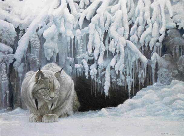 Robert bateman Dozing Lynx