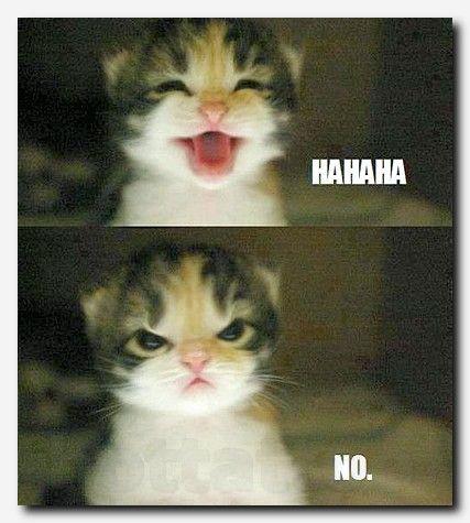 #humor #funny comedy full, business humor quotes, dumb people jokes, ver filme completo de comedia, animal funny photos, innocent pranks, filmy animowane smieszne, funny cartoon quotes, list of adjectives, funny cm, dumb dad jokes, fajne smieszne obrazki, el mundo es espana, xyz comics, popular things on the internet, comedy new film