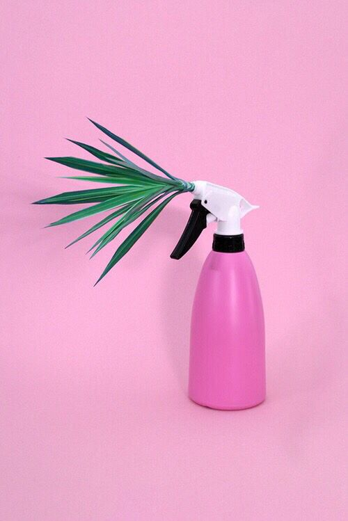hmmm PINTREST// @YELLOWISYELLOW bottle palm tree plant green pink white tumblr aesthetic idea weird cool funny different pastel color
