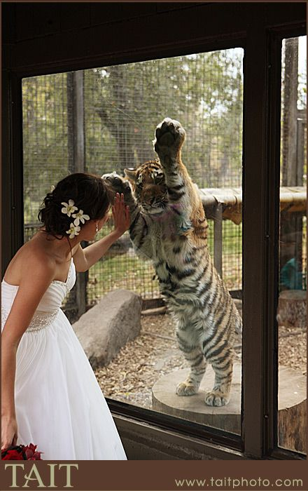 calgary zoo wedding photographer