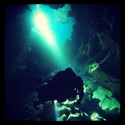 Diving the worlds reefs! learnt in an amazing spot for adventure dives and reef life, Roatan, Honduras!