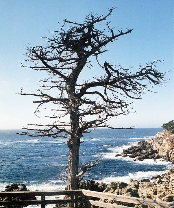 The Cypress, 17 Mile Drive, California