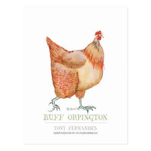 Buff Orpington hen, tony fernandes Postcard