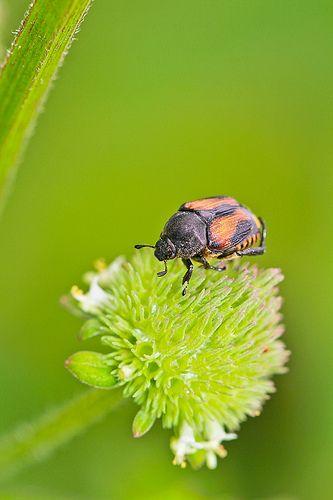 September 05, 2013 - Bug 001 Small