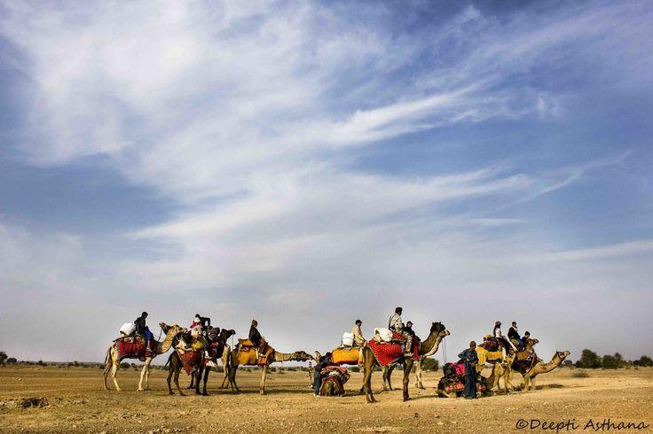 Camel Thar desert Rajstha