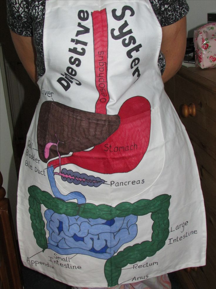 Childs apron and Sharpie pens to create a wearable digestive system. Science class display