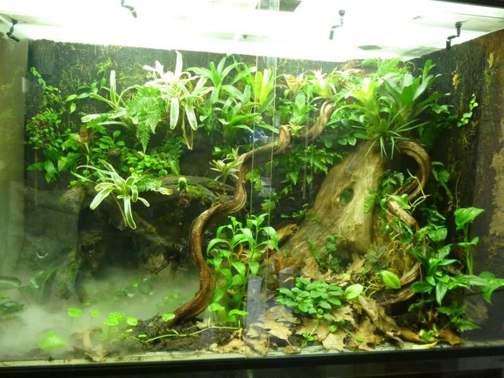 Top 25 Ideas About Dart Frog Vivs On Pinterest
