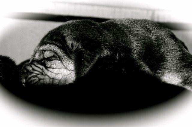 """Originál Alminka (bloodhound) - předloha pejska z Mariny Quilt duben/květen 2015. :-) V době, kdy vznikla """"kopie"""", nebyla Alminka ještě na světě. Proto ta modrá barva látky. :-)"""