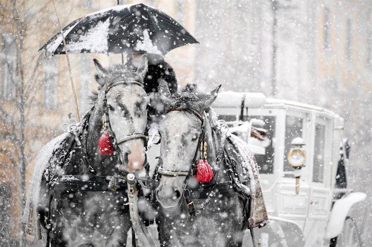 Wintry mix  A horse carriage rides through heavy snowfall in Krakow, southern Poland on Feb. 15.    Agencja Gazeta / Reuters