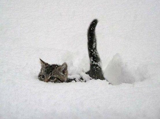 tiny kitten in the snow.